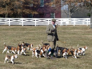 shakertown-beagles-1-2010